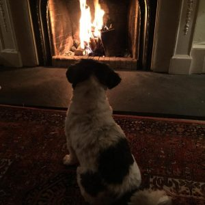 Dog reviewing the open fire at holiday house for 12 - 5 stars!